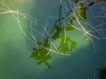 在瀑布的岩石的绿色水坑与浮动针的 库存图片