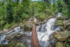 在瀑布的木材 库存照片