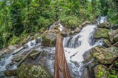 在瀑布的木材 库存图片