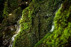 在瀑布的石头的青苔在森林里 免版税库存图片