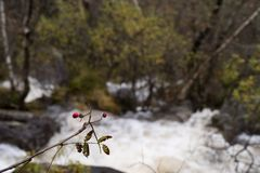 在瀑布的花揪 免版税库存图片