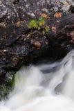 在瀑布的年轻杉木 库存照片