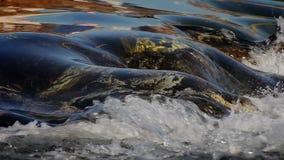 在瀑布的水,镇静大气 股票视频