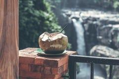 在瀑布背景的年轻新鲜的有机椰子在巴厘岛密林  图库摄影
