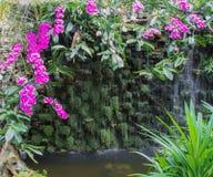 在瀑布附近的白色和紫色兰花 免版税库存照片