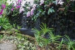 在瀑布附近的白色和紫色兰花 库存照片