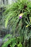 在瀑布附近的紫色黄色花 免版税库存图片