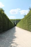 在灌木和叶子的道路 免版税库存照片