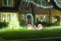 在灌木和大橡树的轻的诗歌选 圣诞节装饰隔离白色 Wi 图库摄影
