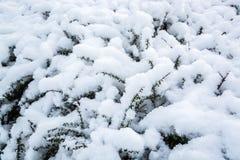在灌木小早午餐的逗人喜爱的雪堆  库存图片