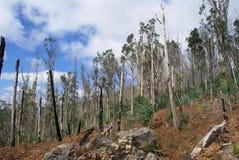 在灌木火以后的马德拉岛 免版税库存图片