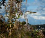 在灌木的一只鸟 免版税库存图片