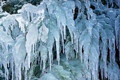 在灌木的冰柱 免版税库存照片
