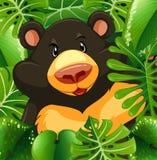 在灌木的北美灰熊 库存例证