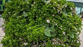 在灌木的各种各样的花 库存照片