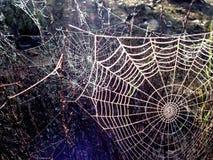 在灌木的多个蜘蛛网 免版税库存图片