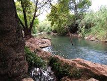 在灌木的小河 免版税库存照片