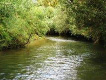 在灌木的小河 图库摄影
