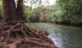 在灌木的小河 免版税图库摄影
