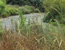 在灌木的小河 库存照片