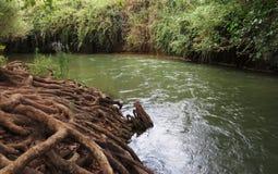 在灌木的小河 库存图片