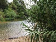 在灌木的小河 免版税库存图片