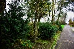 在灌木的树 图库摄影