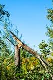 在灌木的残破的树在清楚的蓝天下 免版税库存照片