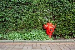 在灌木的消防栓 库存照片