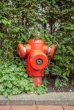 在灌木的消防栓 图库摄影