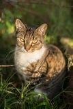 在灌木的猫 免版税库存图片