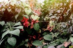 在灌木的美丽的五颜六色的叶子在温暖的太阳点燃秋天 免版税库存图片