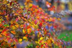 在灌木的色的叶子 库存图片