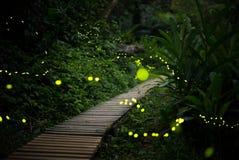 在灌木的萤火虫在晚上在台湾 库存图片