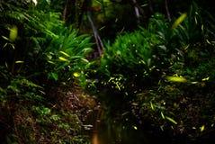 在灌木的萤火虫由小河 免版税库存图片