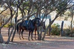 在灌木的被备鞍的马 库存图片