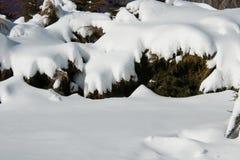 在灌木的随风飘飞的雪 免版税库存照片