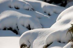 在灌木的随风飘飞的雪 库存图片