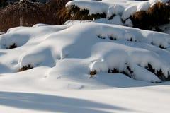 在灌木的随风飘飞的雪 库存照片