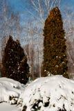 在灌木的随风飘飞的雪 免版税图库摄影