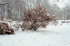 在灌木的雪在城市公园 库存照片