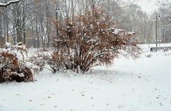 在灌木的雪在城市公园 库存图片