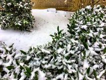 在灌木的雪 免版税库存图片