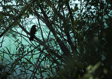 在灌木的鸟剪影 图库摄影