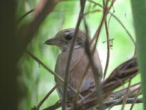 在灌木的鸟 免版税库存照片