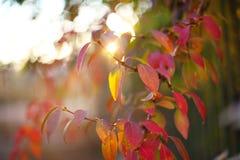 在灌木的Defocused色的叶子 库存图片