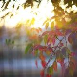在灌木的Defocused色的叶子 图库摄影