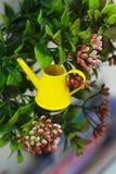 在灌木背景的庭院微型黄色喷壶  免版税库存照片