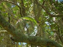 在灌木2的HDR水晶球 库存图片