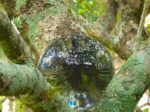 在灌木1的HDR水晶球 库存图片